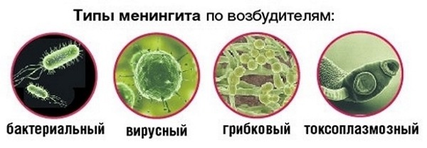 Вирусы бактерии грибки
