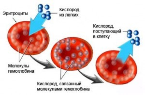 Низкий гемоглобин при месячных