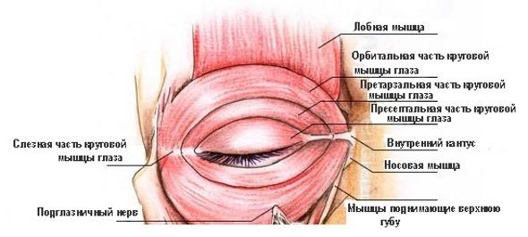 Спазмы глазниц и лобных долей
