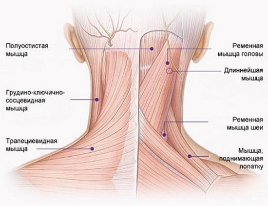 Болит шея сзади ухо и голова
